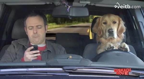 Obten tu perro lazarillo y vive pegado a tu smartphone sin preocuparte.